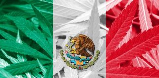 cannabis en mexico